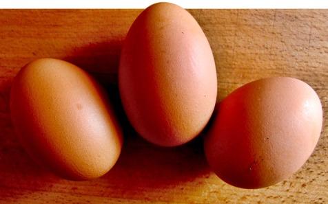 5-vegetarian-friendly-protein-powders-graphics-1